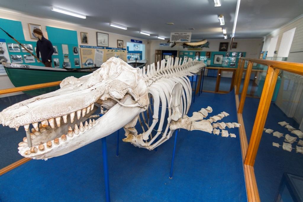 killer whale museum, eden