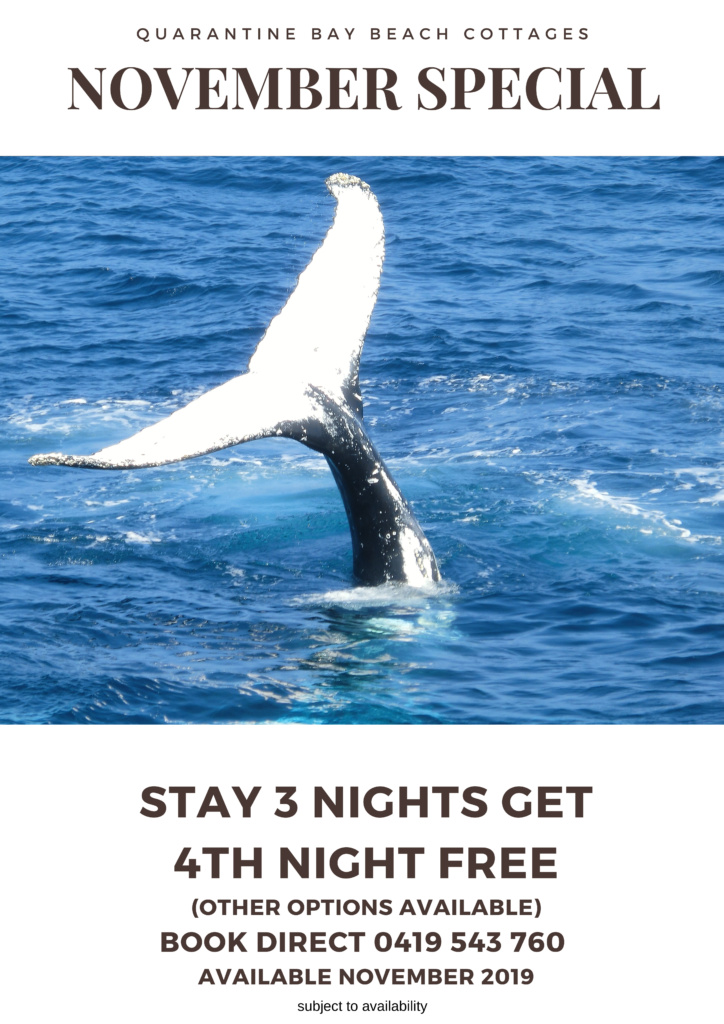 November specials Quarantine Bay Cottages Eden NSW